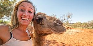 Zoo Camel